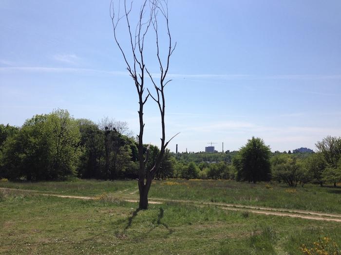 Дерево на лысой горе