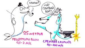 Годзила и нейроны