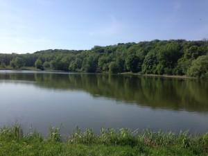Вид с голосеевского озера