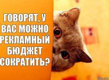 kotenok_68064262_orig_